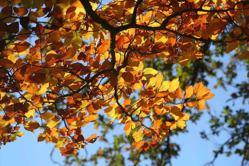 Jesienny wierszyk